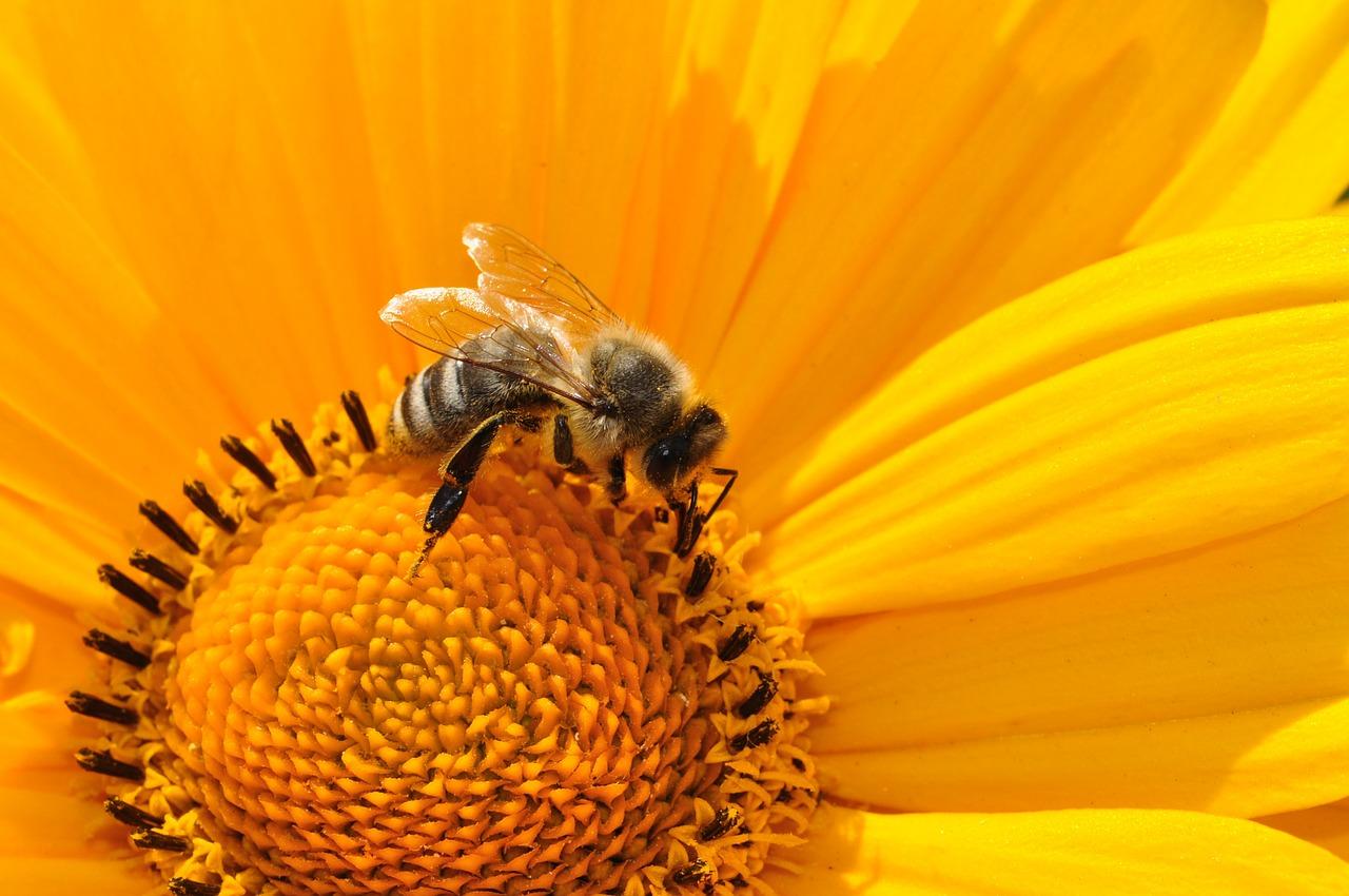 Trochę o osach i trochę o pszczołach