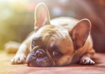 Gdzie i jak zakupić psa?
